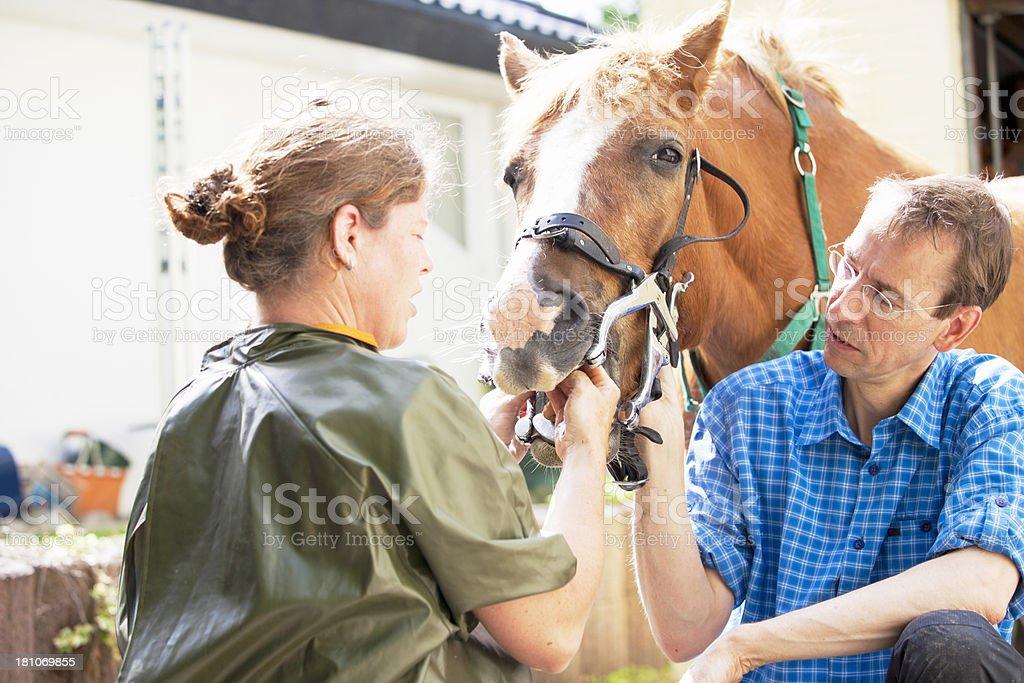 Horse dentists royalty-free stock photo