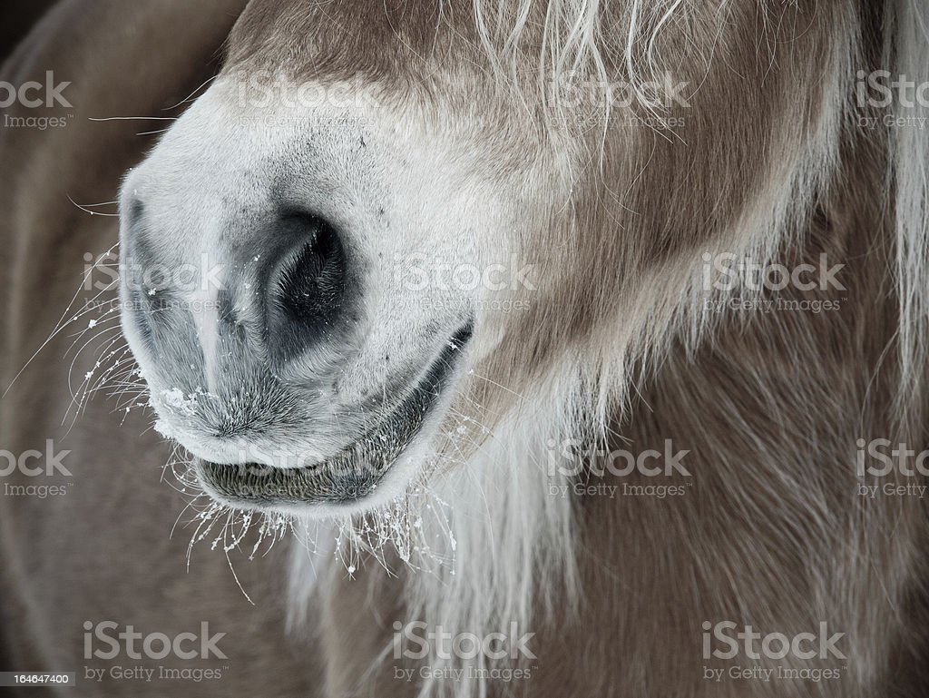horse detail nose nostrils and mouth royalty-free stock photo