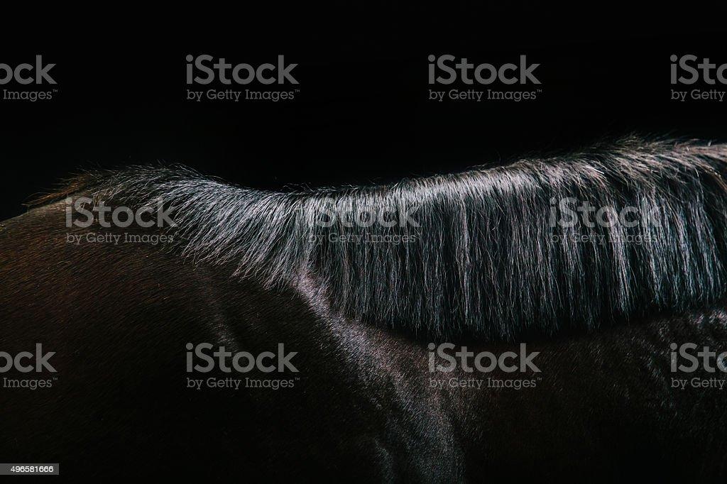 Koń szczegóły – zdjęcie
