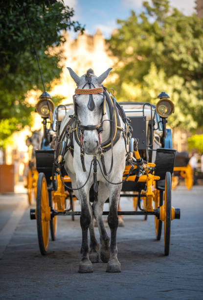 馬拉的馬車在塞維利亞西班牙 - 載客馬車 個照片及圖片檔