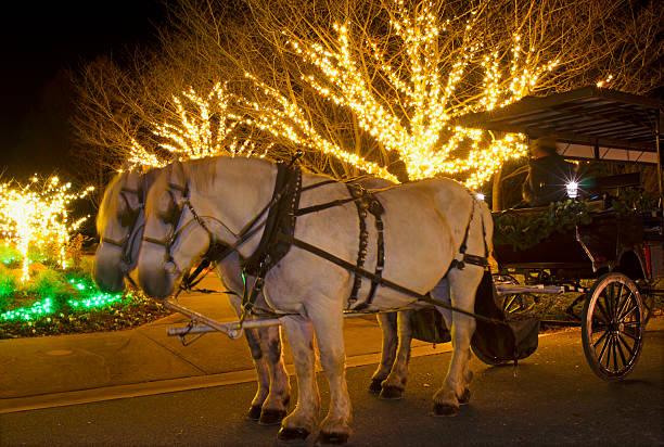 horse drawn carriage - pferdekutsche stock-fotos und bilder
