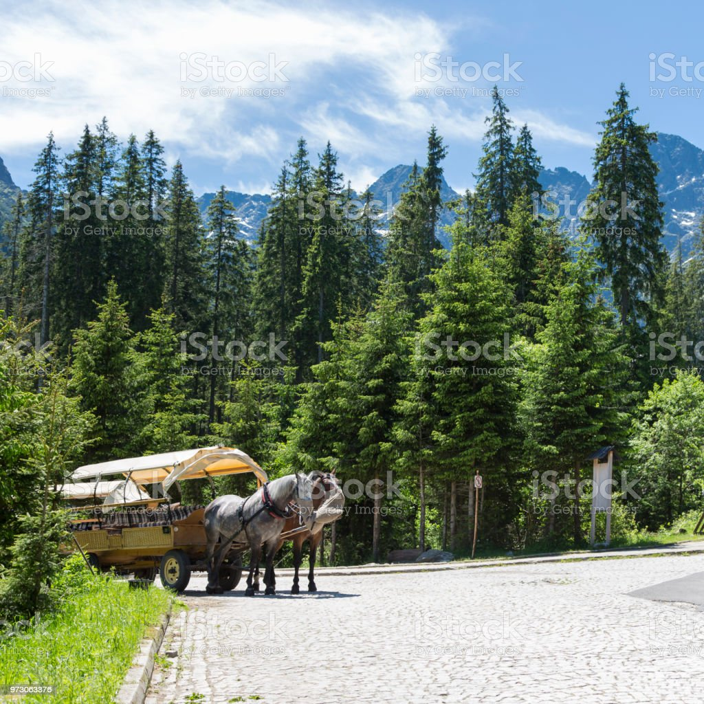 Horse drawn carriages in the Tatras stock photo