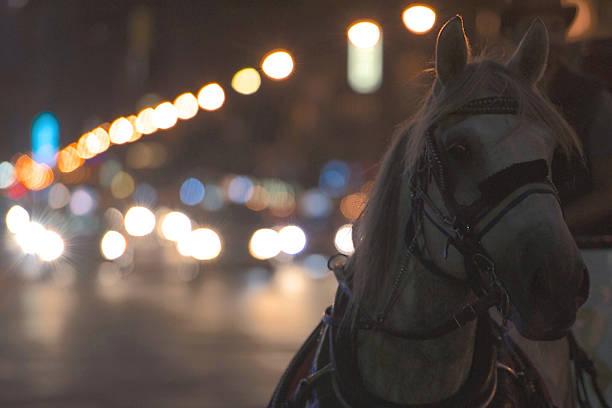Der Horse Drawn – Foto