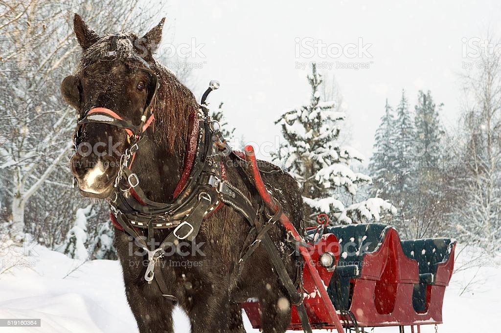 Horse drawn sleigh in snow stock photo