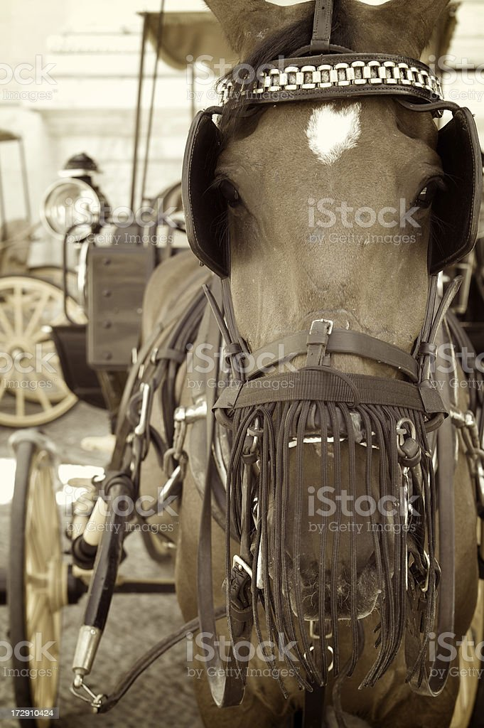 Horse Draws Carriage in Seville, Spain royalty-free stock photo