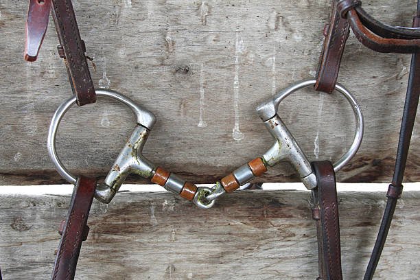horse d-ring snaffle bit - horse bit stock photos and pictures