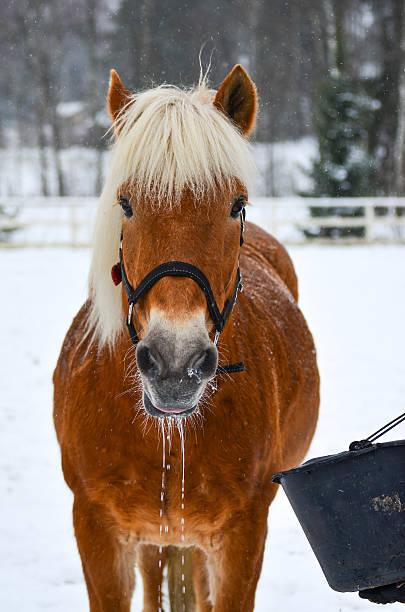 Horse drinks stock photo