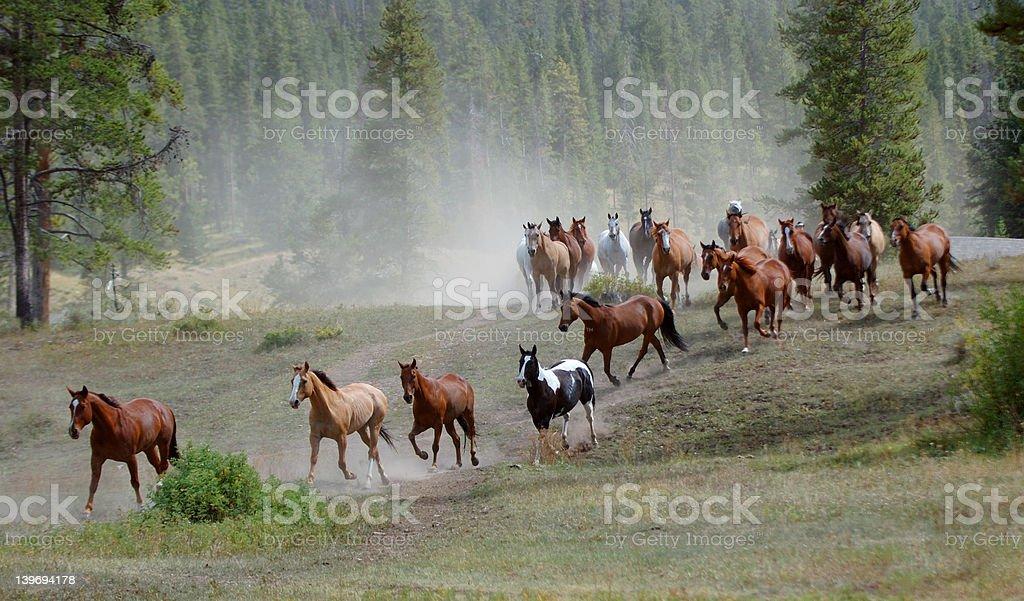 Horse Drive stock photo
