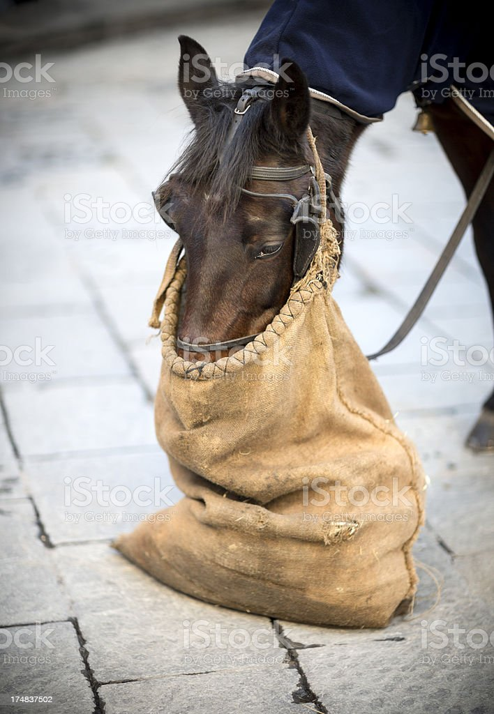 Horse eating from a burlap sack, Florence Italy royalty-free stock photo