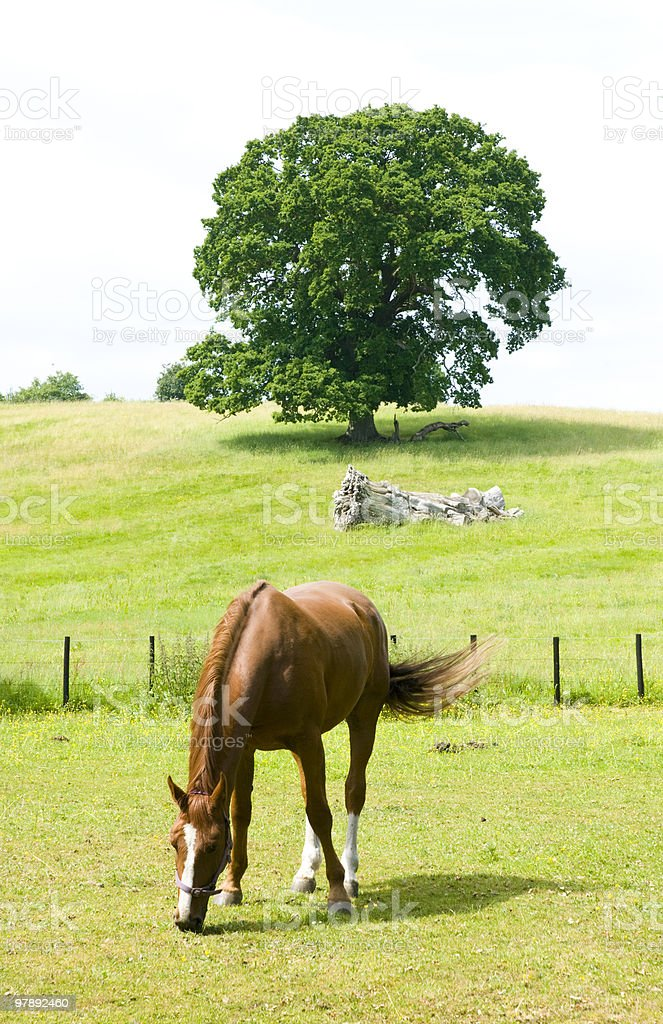 Horse eating grass in a  beautiful green meadow. royalty-free stock photo