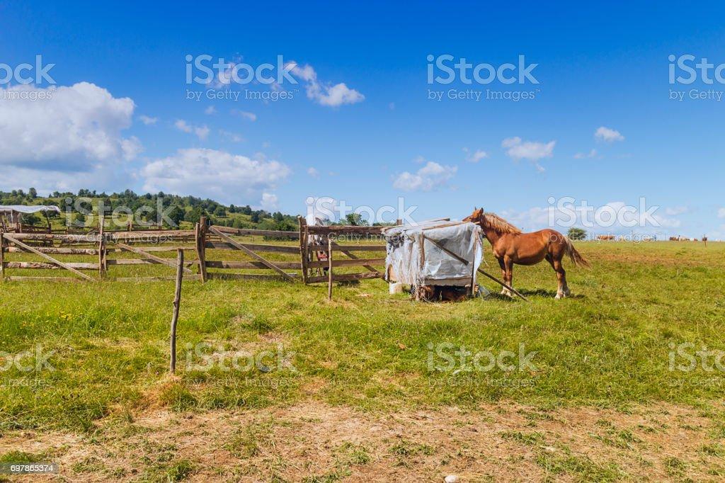 Horse eating hay Romania stock photo