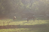 View on several horses eating freely in a green paddock on a November morning sunlight. Trip to Gradac River 2018.
