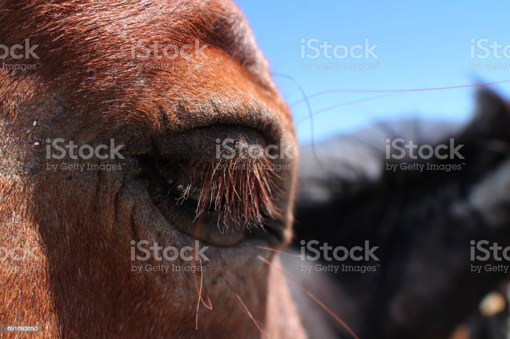 Horse Eye 1 stock photo
