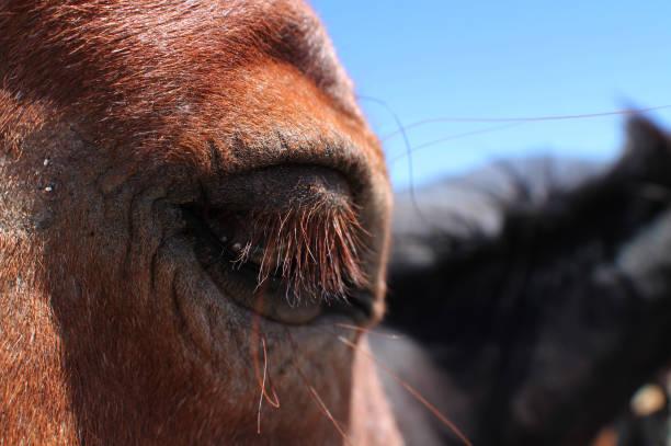 Horse Eye 1 stock photo