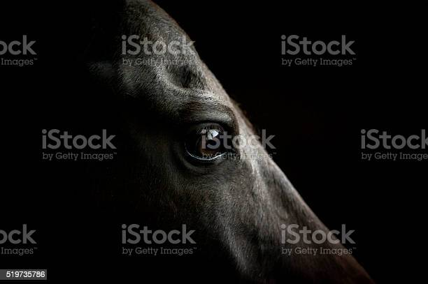 Horse eye closeup on dark background picture id519735786?b=1&k=6&m=519735786&s=612x612&h=fb 70 mth1isgebf0fjq38xjmogdnq0umnntos8s3tg=