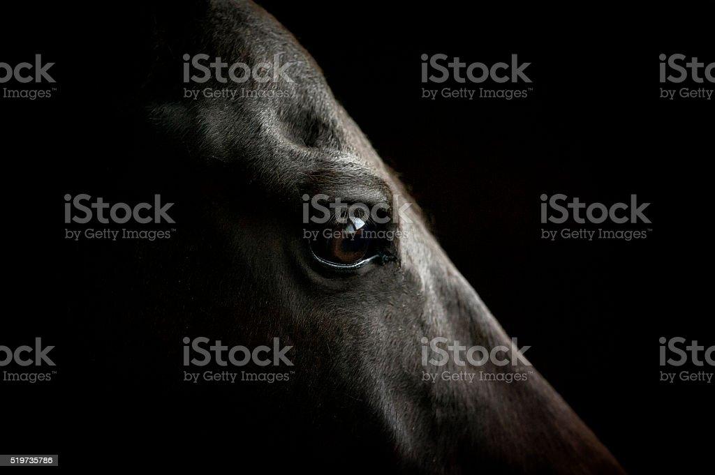 Zbliżenie oko konia na ciemnym tle – zdjęcie
