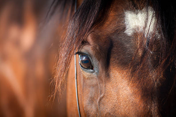 horse eye closeup - horse stock pictures, royalty-free photos & images