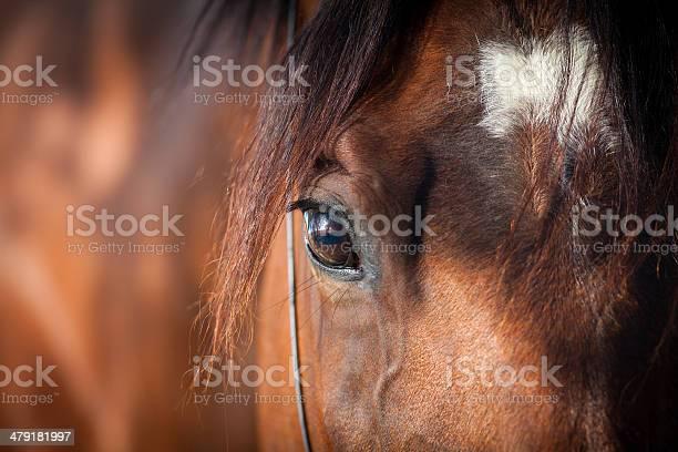 Photo of Horse eye closeup
