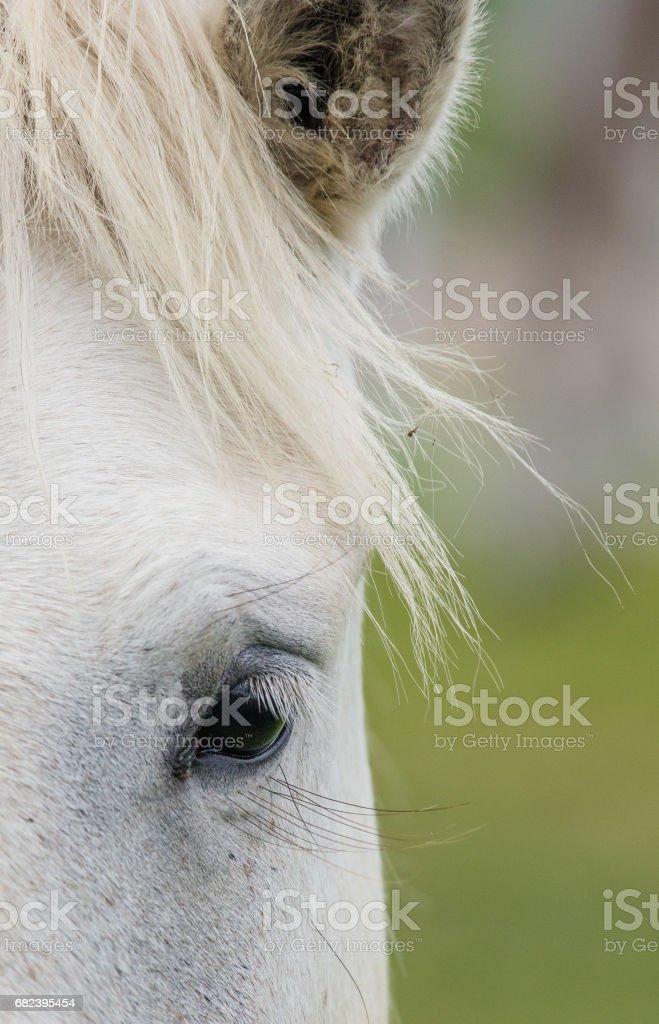 Horse eye close-up. royalty-free stock photo