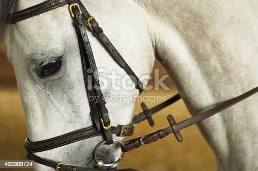 Horse head with bridle. Close up of the eye