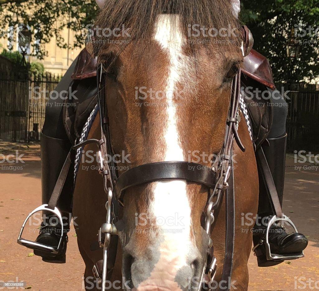 Horse face closeup - Zbiór zdjęć royalty-free (Bez ludzi)