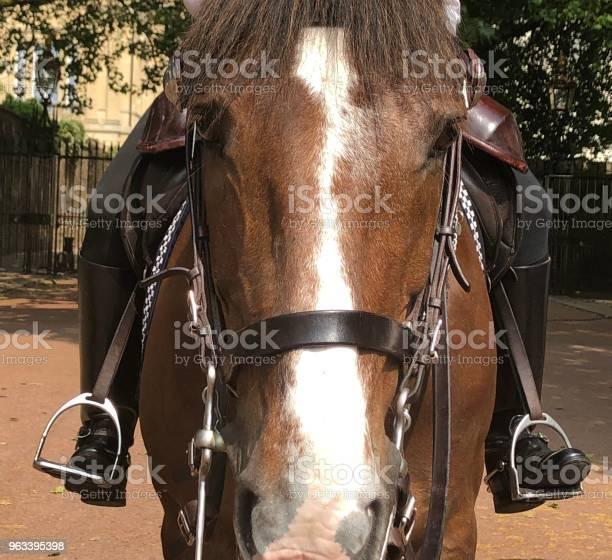 Zbliżenie Twarzy Konia - zdjęcia stockowe i więcej obrazów Bez ludzi