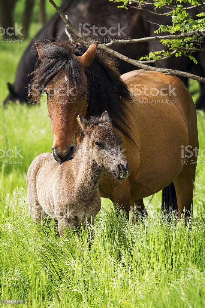 Horse family stock photo