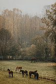Horse Farm And Nature Scenery, Animals Grazing in Autumn