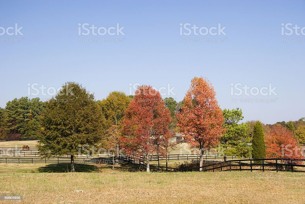 Horse granja en el otoño foto de stock libre de derechos