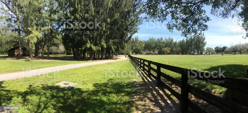 Horse farm park stock photo