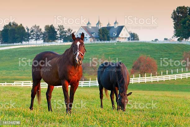 Photo of Horse Farm