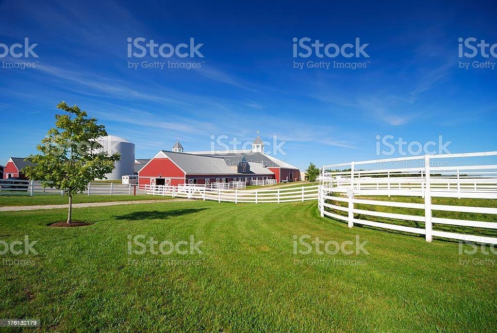 horse farm royalty-free stock photo