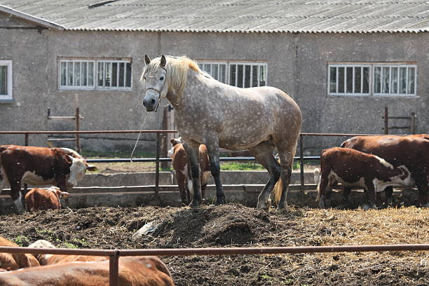 Horse farm – Foto