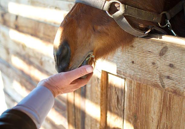 Horse feed stock photo