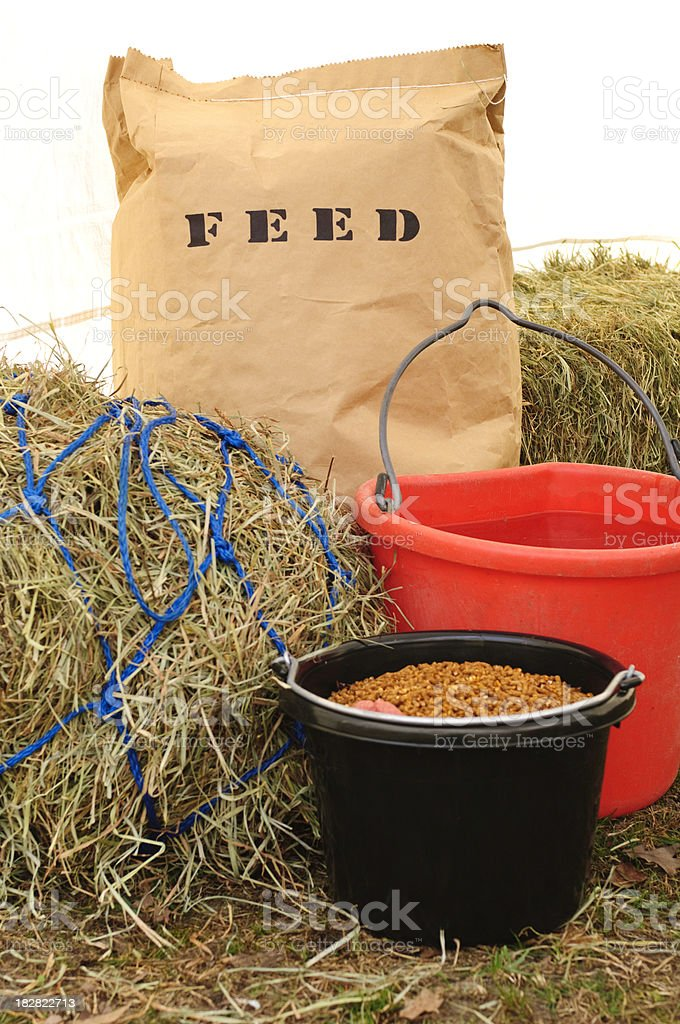 Horse Feeding and Nutrition stock photo