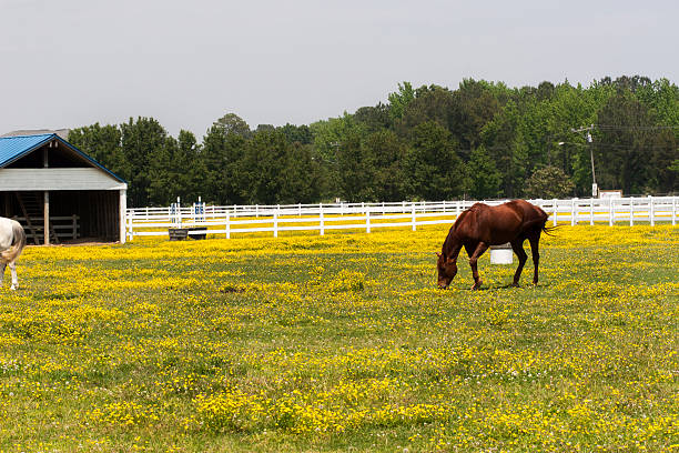 Horse feeding on grass in rural area stock photo