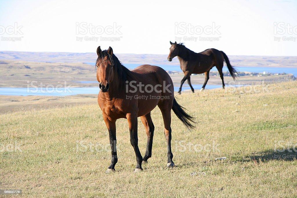 Horse Flesh royalty-free stock photo