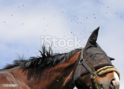 A horse chows down in a field during an afternoon in northwestern Switzerland.