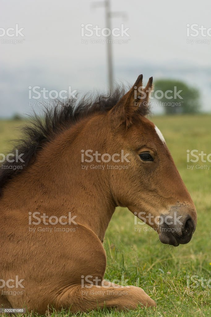 Horse foal stock photo