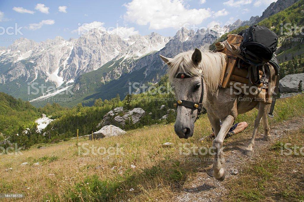 Koń z Plecaki – zdjęcie