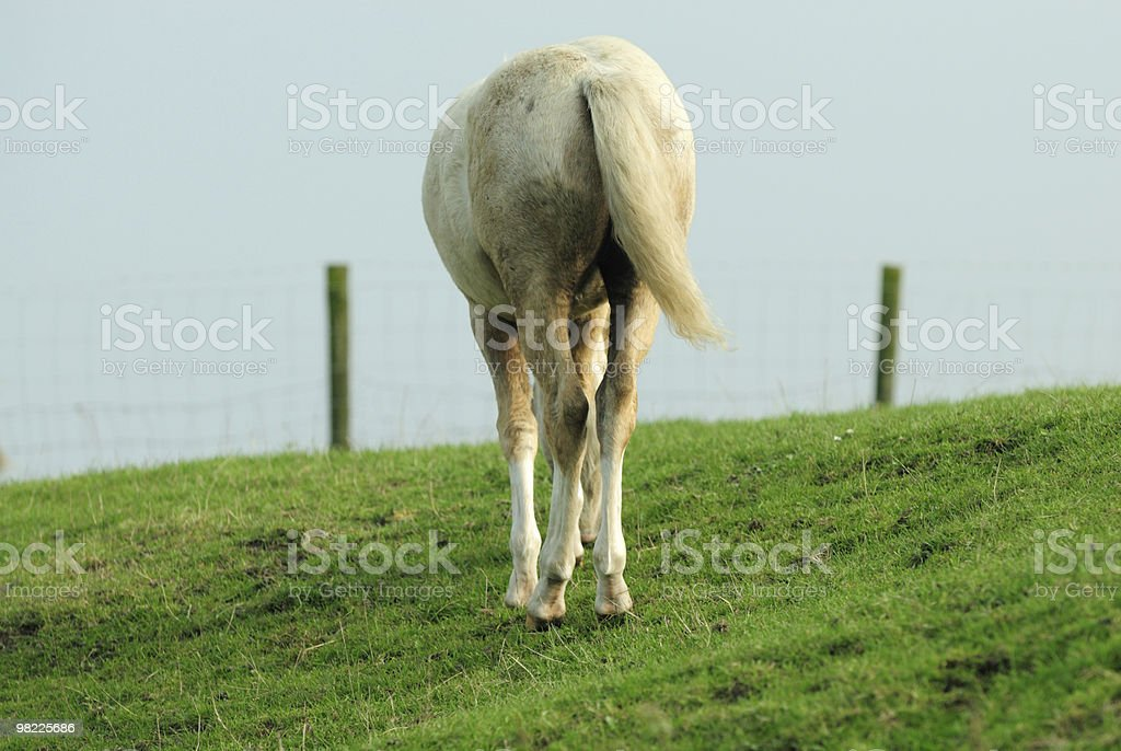 Horse from behind stock photo