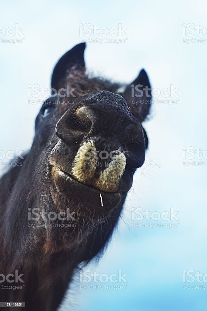 horse fun stock photo