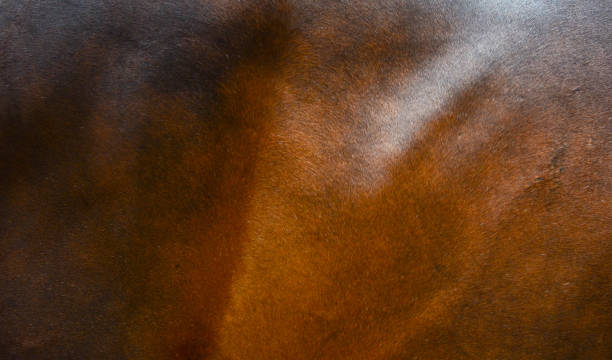 Horse fur background Horse fur background cowhide stock pictures, royalty-free photos & images