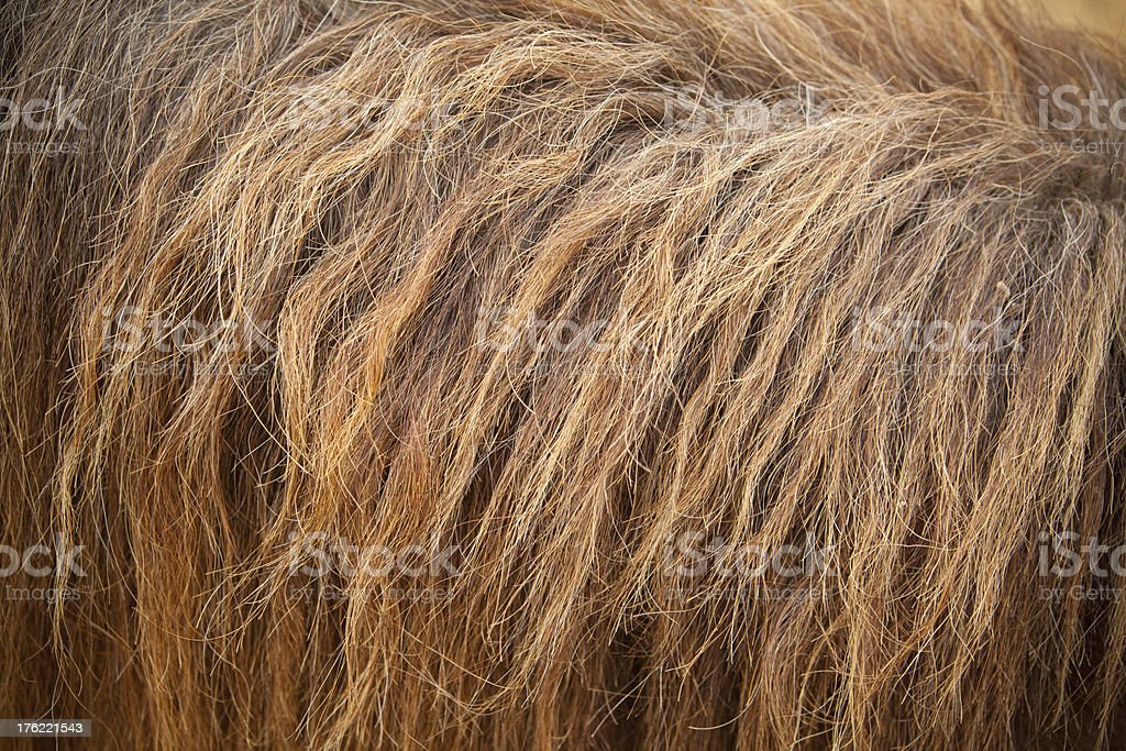 horse fur royalty-free stock photo