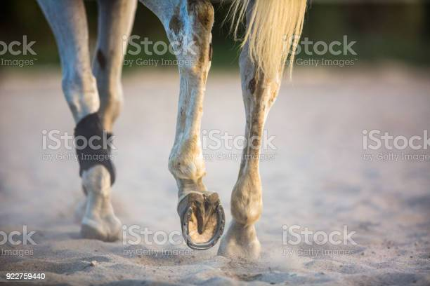 Horse galloping in sand picture id922759440?b=1&k=6&m=922759440&s=612x612&h= pgniy9hup xirvst3fna9dt1ka5m 6nqfbyjnib1ai=