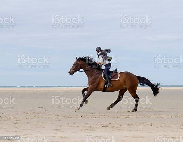 Horse galloping on beaches of zeeland the netherlands picture id157726085?b=1&k=6&m=157726085&s=612x612&h=cyksvqy527w3co r6wiwiwtrao4ebxsvfnxey5lboi8=