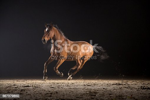 Brown horse running on track at night.