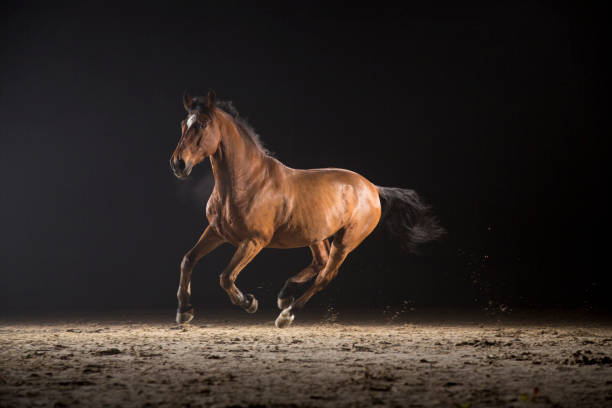Horse galloping picture id667379850?b=1&k=6&m=667379850&s=612x612&w=0&h=vn gh1myoy ojprnrbrcqmh2gsqj5 kfzesz9sxv0y0=