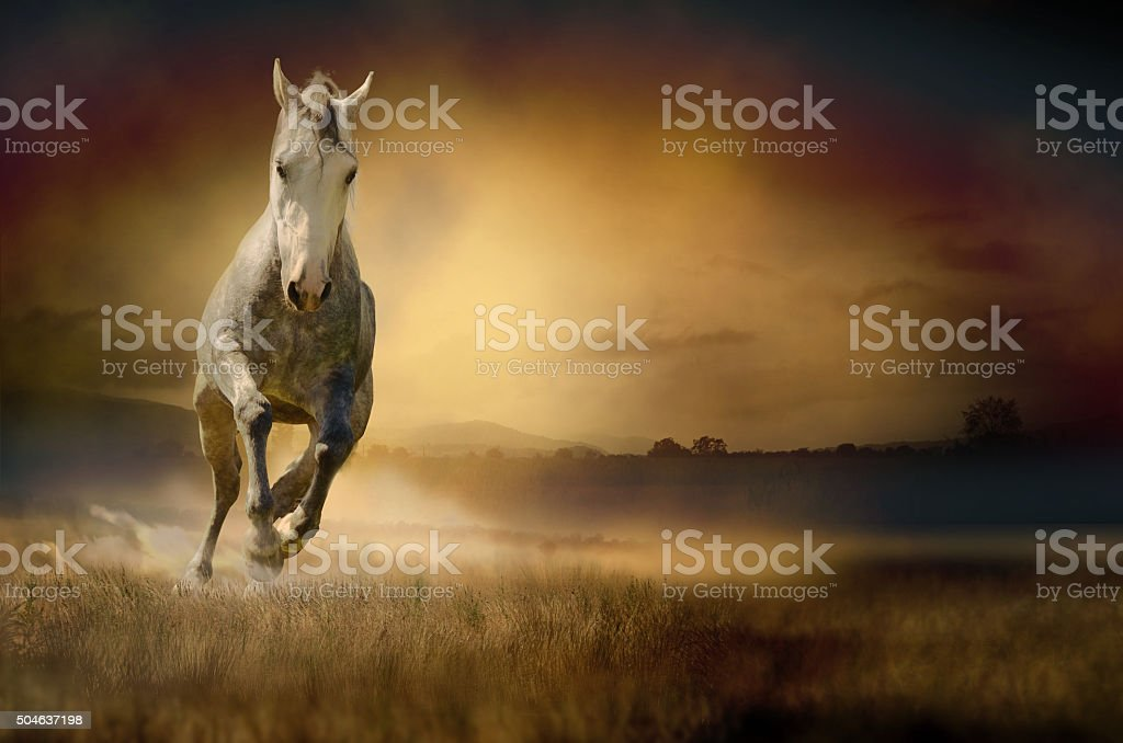 Horse galloping through sunset valley stock photo
