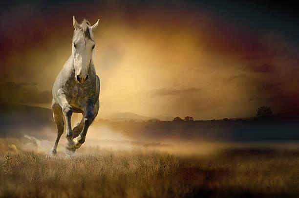 horse galloping durch sunset valley - schönen abend bilder stock-fotos und bilder